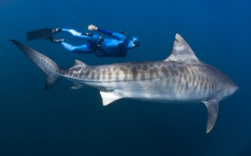They say that there is a shark within 20 ft of you whenever you are in the Ocean.